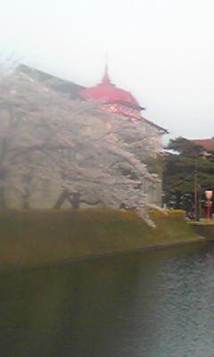 鶴岡公園花見